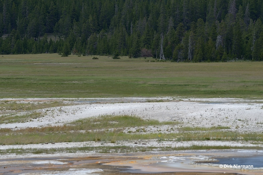 Stirrup Spring UNNG-THD-1 Yellowstone